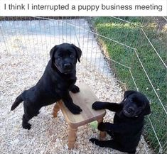 Animal Memes that will Make Your Day! Funny Animal Memes that will Make Your Day! - Lovely Animals Funny Animal Memes that will Make Your Day! - Lovely Animals World Funny Dog Memes, Funny Animal Memes, Cute Funny Animals, Funny Animal Pictures, Cute Baby Animals, Funny Cute, Funny Dogs, Memes Humor, Animal Pics