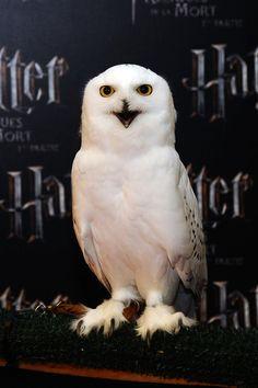 Hedwig, broke my heart when she died