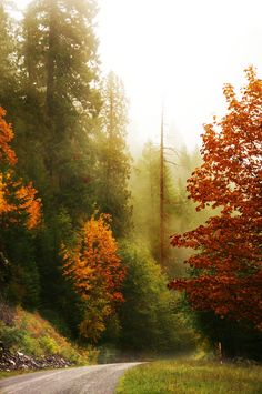 Autumn Road by Darrell Wyatt**