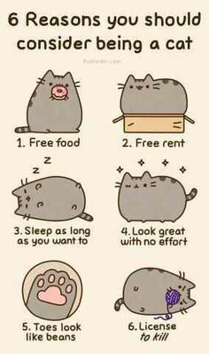 I want to be a cat..
