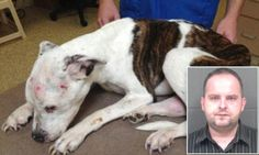 Puppy Doe's illegal immigrant alleged torturer faces decades in prison as he's hit with 12 counts of abuse and in this case justice did prevail for the victim which could not speak up for himself but we did Load and Clear. Animal Abusers We Are Watching You Right Now and You All Will Go To Jail.