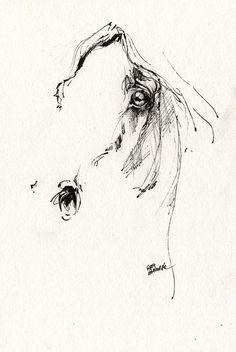 Horse Drawing - Arabian Horse Sketch 2014 05 28 by Angel  Tarantella                                                                                                                                                      More