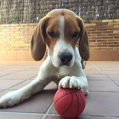 """""""This is my ball No one else's..."""