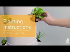 How to Start Seeds & Transplant Seedlings to Your Tower Garden®: Planting Instructions - YouTube