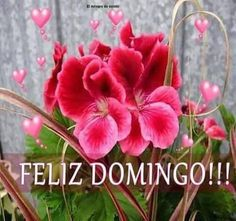 Happy Week, Happy Sunday, Sunday Quotes, Good Morning Quotes, God Is Good, Diy Crafts, Plants, Happy Sunday Images, Good Morning Wishes