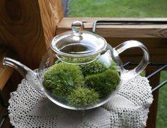A Terrific Teapot Terrarium - Foodista.com