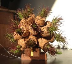 Air Plant Ball with Wood Stand by LivingGallery on Etsy, $125.00