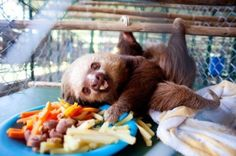 baby sloth is the cutest.
