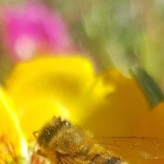 🐝 I like to travel and to smell all the flowers!🌺 I love animals and nature🍀my purpose is to make Mother's Nature bloom and beautiful🌏 Support me 👇 Save The Bees, Mother Nature, Purpose, Bloom, Flowers, Travel, Animals, Beautiful, Viajes