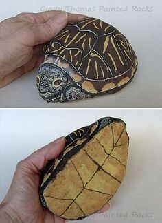 Abby, the painted rock box turtle, by Cindy Thomas: