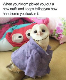 19 Times Animals Had Some Unresolved Issues With Their Mom (Memes) - I Can Has Cheezburger? Animals Too Have Unresolved Issues With Their Mom (Memes) - World's largest collection of cat memes and other animals Funny Animal Jokes, Stupid Funny Memes, Cute Funny Animals, Funny Relatable Memes, Funny Animal Pictures, Funny Cute, Funny Owls, Funny Stuff, Fail Pictures