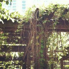 Garden in chicago