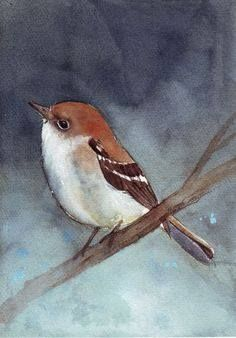 Bird Painting Fly Catcher print of watercolor by Splodgepodge on etsy. Watercolor Bird, Watercolor Animals, Watercolor Paintings, Watercolours, Illustrations, Bird Prints, Bird Art, Beautiful Birds, Painting Inspiration