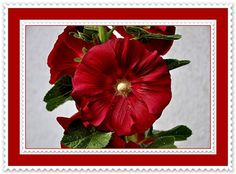 RARE WINE HOLLYHOCK ~ Sacred Edible Plant ~ Victorian Shabby Chic Cottage Garden Flower ~15 Seeds ~ Unique Gift ~Hard To Find ~ Easy To Grow