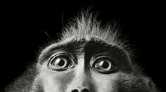 Tim Flach's intimate animal portraits reveal nature's human side