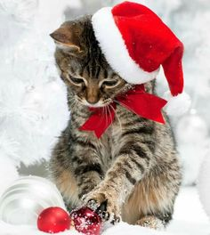Christmas cat photography Christmas cat photography The post Christmas cat photography appeared first on Mary& Secret World. Cute Kittens, Fluffy Kittens, Cats And Kittens, Christmas Kitten, Christmas Animals, Merry Christmas, Christmas Thoughts, Christmas Trees, Baby Animals