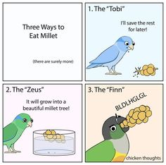 Featuring Michelle's birds at Funny Birds, Cute Birds, Cute Funny Animals, Funny Cute, Cute Cats, Funny Animal Videos, Funny Animal Pictures, Cute Comics, Funny Comics
