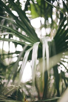 year old writer chasing after her Father's heart. Palm Tree Leaves, Palm Trees, Plant Leaves, Green Plants, Tropical Plants, Tropical Garden, Belle Plante, Leaf Photography, Plant Aesthetic