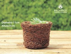 """Maceta Modelo No. 5 Beneficios de nuestras macetas biodegradables: -Totalmente Orgánicas -Facilitan el drenaje y enraizamiento de la planta -Trasplante """"sin estrés"""" -Acelera ciclos de cultivo -Apta para todo tipo de cultivos  Pot Model No. 5 Benefits of our biodegradable pots : -Totally Organic -Facilitate Drainage and plant rooting -Trasplante """"without stress"""" -Helps accelerating crop cycles -Suitable for al types of crops  #photooftheday #picoftheday #recycle #eco #ecologia #biocultura…"""