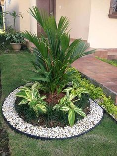 The yard is a great place for enjoying the beautiful sunny days. If you are looking for some ideas to beautify your backyard, garden edging Small Garden With Pebbles, Nice Small Garden Ideas, White Pebble Garden, White Pebbles, Back Garden Ideas, Landscaping With Palm Trees, Front Landscaping Ideas, Landscaping Design, Garden Landscaping