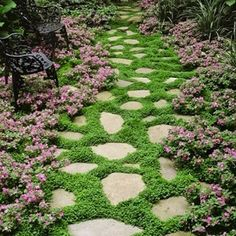 Stepping stones with thyme planted in between.