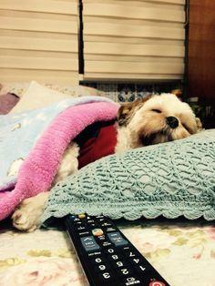 Grazy caiu no sono assistindo TV!!!