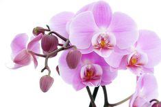 Неинфекционные болезни орхидей. Вирусные болезни орхидей. Болезни листьев. Гнили. Профилактика болезней, Меры борьбы с ними.