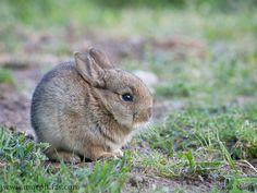 Britain's Cutest Wild Animals: The Search is On!   VisitBritain Super Blog
