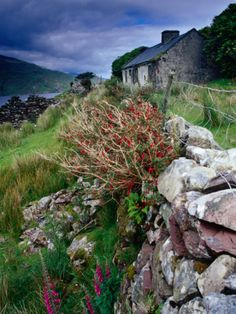 Abandoned Cottage on the Famine Relief Road in Killary Harbour, Connemara, Connaught, Ireland Photographic Print by Gareth McCormack at Art.com