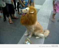Trust me I'm a lion