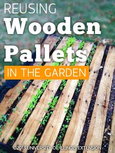 Reusing Wooden Pallets in the Garden