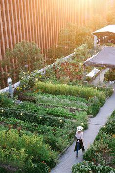 rooftop garden 24 Roof Garden Design I - gardencare Urban Agriculture, Urban Farming, Sustainable Farming, Garden Care, Garden Beds, Contemporary Landscape, Landscape Design, Landscape Architecture, Rooftop Garden
