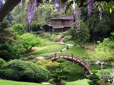 Wisteria frames the Japanese Garden in the Spring. Photo courtesy The Huntington Library, Art Collections, and Botanical Gardens