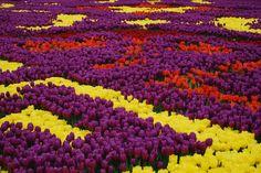 https://flic.kr/s/aHsk9Y457W   Festival dei Tulipani Istanbul 2015
