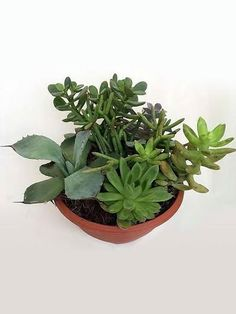 Buy Home Decor Plants Online Plants Online, Seasonal Flowers, Glazed Ceramic, Succulents Garden, Green Grass, Better Homes, Outdoor Gardens, Greenery, Planters