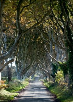 The Tangled Wood  - Color Silver Art Print - Northern Ireland - Fine Art Photography - Wall Art
