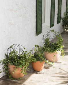 Small Medium And Large Wire Topiary Ball Frames In Pots On Walkway Garden Forms For Outdoor Topiary, Outdoor Planters, Outdoor Landscaping, Garden Planters, Planter Pots, Walkway Garden, Outdoor Decor, Frames For Sale, Little Gardens