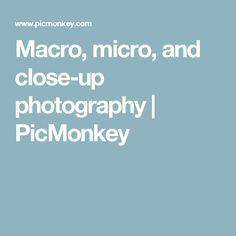 Macro, micro, and close-up photography   PicMonkey