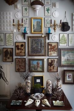 i want a royal tennenbaum-sy wall of flora and fauna trinkets.