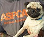 ASPCA Opens Behavioral Rehabilitation Center To Help Animal Victims of Cruelty