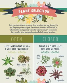 Choosing Your Plants