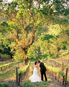 A vineyard wedding in Los Olivos, CA