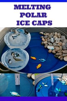 MELTING Polar Ice Caps activity - fun demonstration demonstrating the effect on sea levels of melting polar ice caps. #scienceforkids #polaricecaps #climatechange #climatechangeforkids