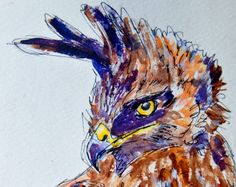 Christi Ferreira Art: Long-crested Eagle, watercolour & ink