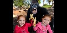 Ella O'Brien & her sister Bridget pose next to Motaba (© Newspix/Rex Features)
