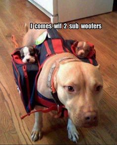 I come with two sub-woofers!