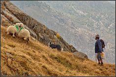 Suiza - Las Montañas - pastoreando | Flickr: Intercambio de fotos
