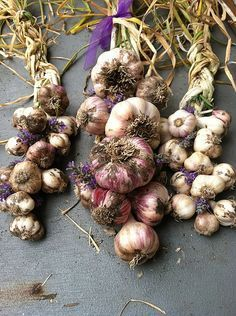 How to plant and grow garlic. Braid softneck garlic varieties to store for future use.