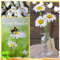 Cool Mist Humidifier It works. Beautiful Monday, Beautiful Collage, Happy March, Happy Monday, Hello Monday, Days Of Week, Months In A Year, Monday Greetings, Collages