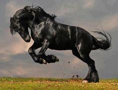Melano horse